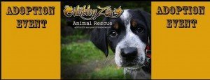motley zoo