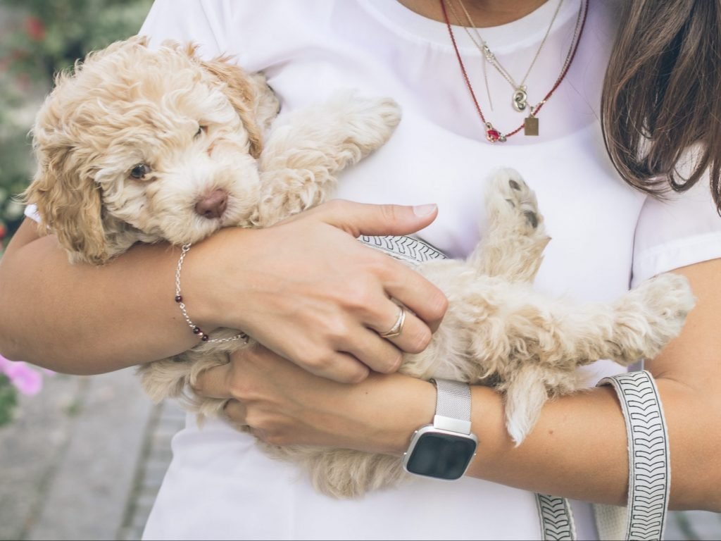 girl holding a cockapoo puppy with a leash